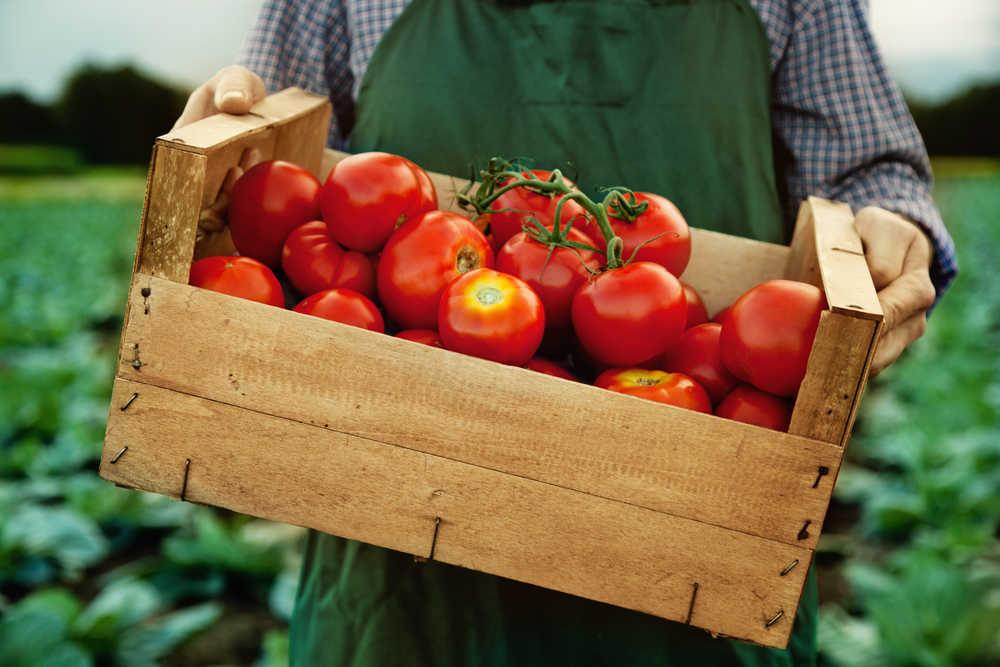 El tomate, un producto bueno para la economía española y para la salud